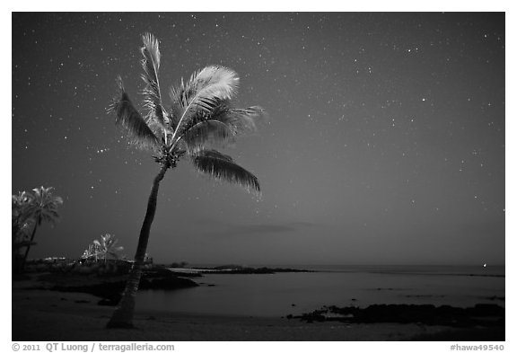 Palm tree ocean under sky with stars, Kaloko-Honokohau National Historical Park. Hawaii, USA (black and white)