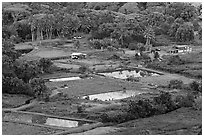 Taro fields and farms from above, Waipio Valley. Big Island, Hawaii, USA (black and white)