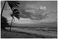 Palm trees, cloud, and ocean surf at sunset. Lahaina, Maui, Hawaii, USA (black and white)