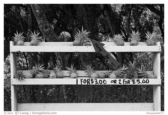 Pineapple self-serve stand. Maui, Hawaii, USA (black and white)
