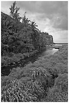 Creek, palm trees, and ocean. Maui, Hawaii, USA (black and white)