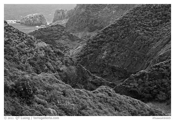 Verdant eroded valley. Maui, Hawaii, USA (black and white)