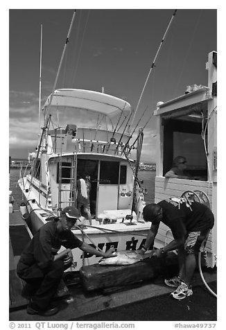 Men cutting fish caught in sport-fishing expedition. Lahaina, Maui, Hawaii, USA (black and white)