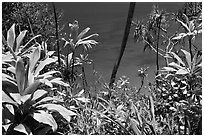 Tropical foliage and blue waters, Na Pali coast. Kauai island, Hawaii, USA ( black and white)