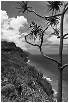 Tree and green coastline, Na Pali coast. Kauai island, Hawaii, USA ( black and white)