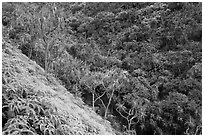 Lush tropical vegetation on Pali, Na Pali coast. Kauai island, Hawaii, USA ( black and white)