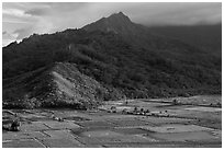 Taro paddy fields and mountains, Hanalei Valley. Kauai island, Hawaii, USA (black and white)