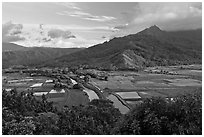 Hanalei Valley and taro paddies from above. Kauai island, Hawaii, USA (black and white)