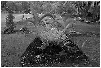 Tomb made of lava rock, Hanalei Valley. Kauai island, Hawaii, USA ( black and white)