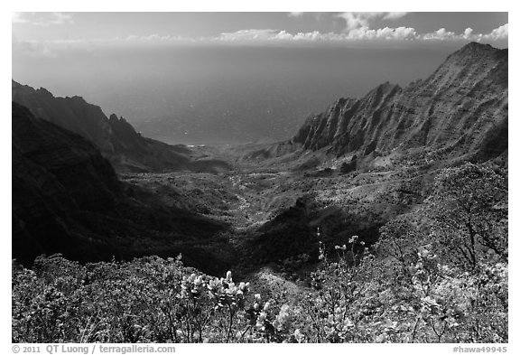Kalalau Valley and Ocean. Kauai island, Hawaii, USA (black and white)