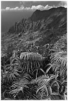 Ferns and Na Pali Cliffs, see from Kokee Mountain Park. Kauai island, Hawaii, USA ( black and white)