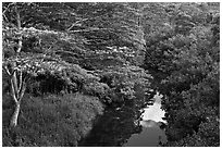 Stream and lush forest from above. Kauai island, Hawaii, USA (black and white)