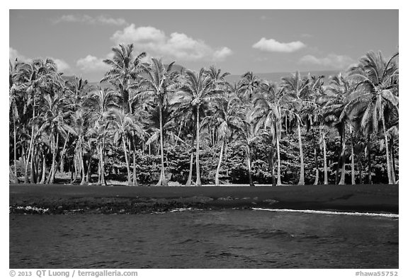 Black sand beach and palm trees, Punaluu. Big Island, Hawaii, USA (black and white)