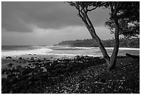 Coastline with rocks, Koa tree, and surf, Pohoiki. Big Island, Hawaii, USA (black and white)