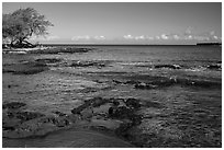 Rocks with bird in distance, Kiholo Bay. Big Island, Hawaii, USA ( black and white)