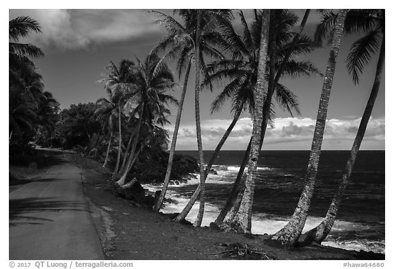 Oceanside road with palm trees, Puna. Big Island, Hawaii, USA (black and white)