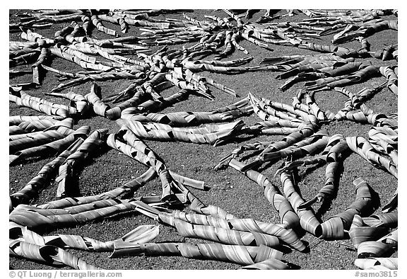 Pandanus leaves being dried. American Samoa (black and white)