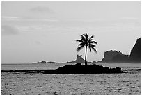 Lone coconut tree on a islet in Leone Bay, sunset. Tutuila, American Samoa ( black and white)