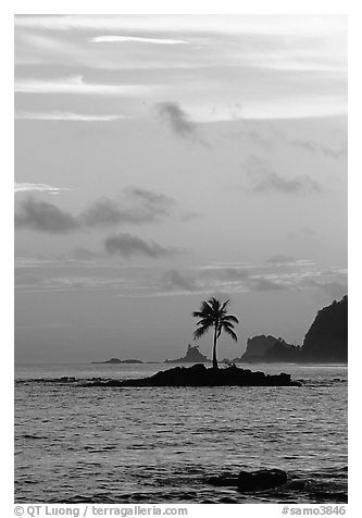 Coconut tree on islet, Leone Bay, sunset. Tutuila, American Samoa (black and white)