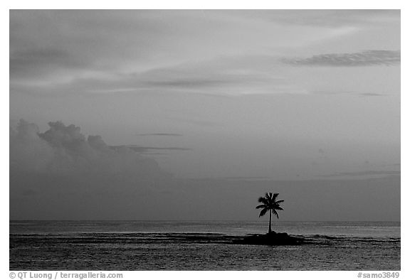 Palm tree on a islet in Leone Bay, sunset. Tutuila, American Samoa (black and white)