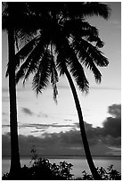 Cocunet trees at sunset, Leone Bay. Tutuila, American Samoa ( black and white)