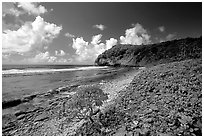 North shore. Aunuu Island, American Samoa ( black and white)