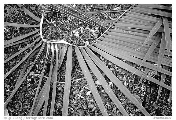 Basket being weaved from a single palm leaf. Tutuila, American Samoa (black and white)