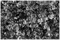 Pictures of Hawaii Sand Grains