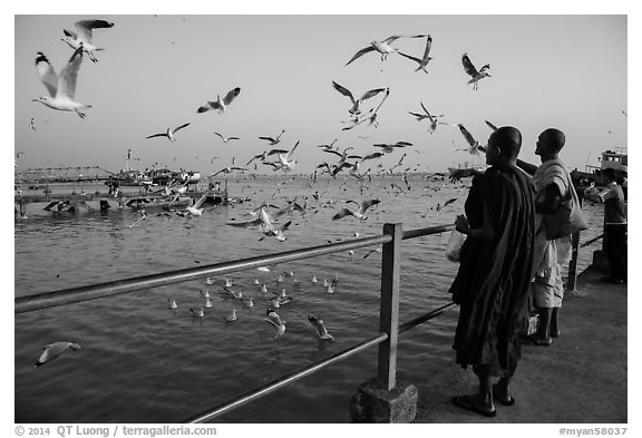 Seagulls flying as monks feed them from Botataung pier. Yangon, Myanmar (black and white)