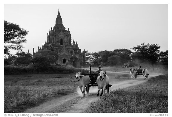 Ox carts and Tayok Pye temple. Bagan, Myanmar (black and white)