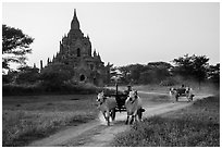 Ox carts and Tayok Pye temple. Bagan, Myanmar ( black and white)