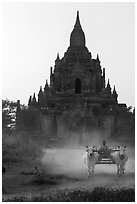 Ox cart riding in front of Tayok Pye temple. Bagan, Myanmar ( black and white)