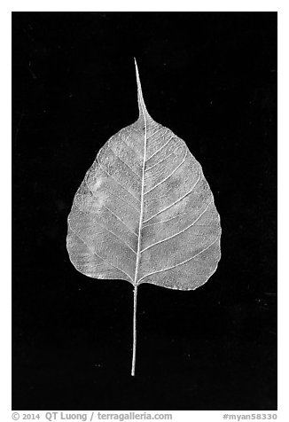 Leaf made of gold. Mandalay, Myanmar (black and white)