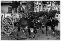 Man driving ox cart carrying water tank. Pindaya, Myanmar ( black and white)