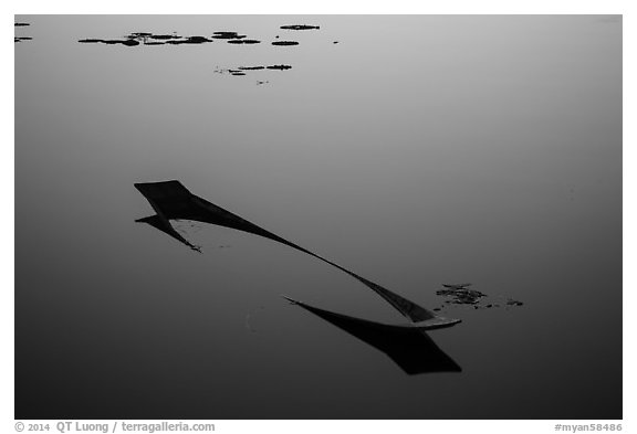 Sunken canoe and aquatic plants in glassy water. Inle Lake, Myanmar (black and white)