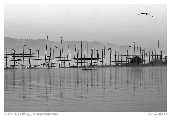 Fence, birds, and hill at dawn. Inle Lake, Myanmar (black and white)