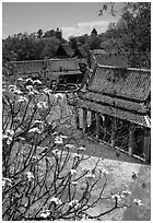 Blooming tree and rooftops. Muang Boran, Thailand ( black and white)