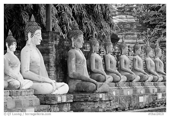 Buddha statues, swathed in sacred cloth as a sign of reverence, Wat Chai Mongkon. Ayutthaya, Thailand (black and white)