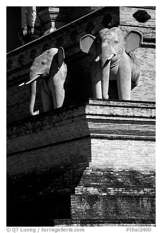 Elephants at Wat Chedi Luang. Chiang Mai, Thailand (black and white)