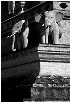Elephants at Wat Chedi Luang. Chiang Mai, Thailand ( black and white)