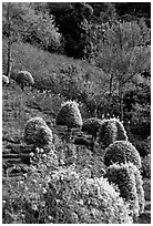 Flower garden in Hmong village. Chiang Mai, Thailand (black and white)