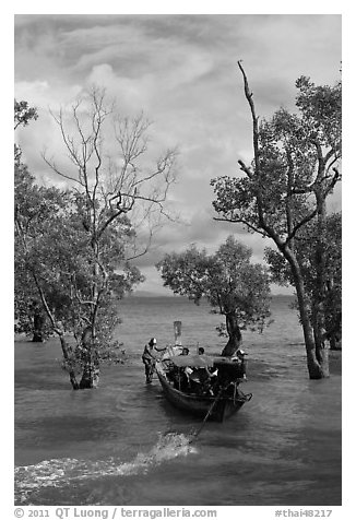 Long tail boat navigating through mangrove trees, Railay. Krabi Province, Thailand (black and white)
