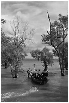 Long tail boat navigating through mangrove trees, Railay. Krabi Province, Thailand ( black and white)