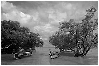 Boats moored near mangrove trees, Railay East. Krabi Province, Thailand (black and white)