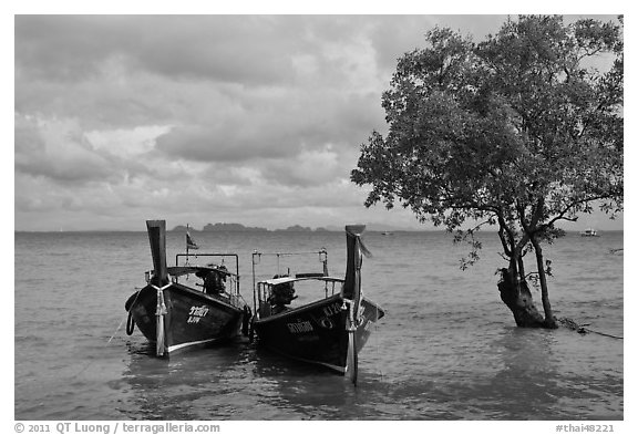 Boats and mangrove tree, Ao Railay East. Krabi Province, Thailand (black and white)