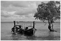 Boats and mangrove tree, Ao Railay East. Krabi Province, Thailand ( black and white)