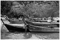 Long tail boats and trees, Ao Rai Leh East. Krabi Province, Thailand ( black and white)