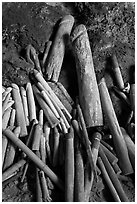 Carved wooden phalluses, Phranang cave, Rai Leh. Krabi Province, Thailand ( black and white)
