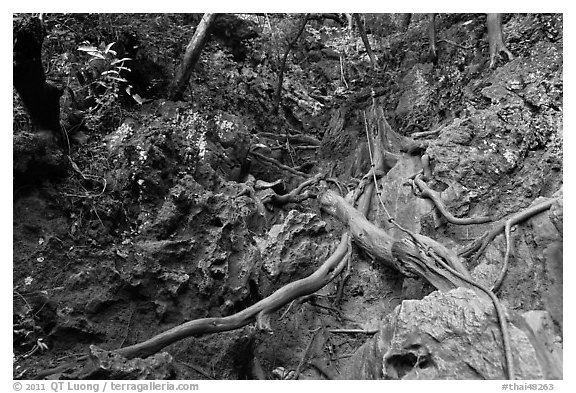 Steep path with ropes, Railay. Krabi Province, Thailand (black and white)