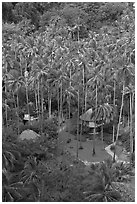 Huts and palm trees from above, Railay. Krabi Province, Thailand (black and white)